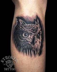 tsu1602-owl