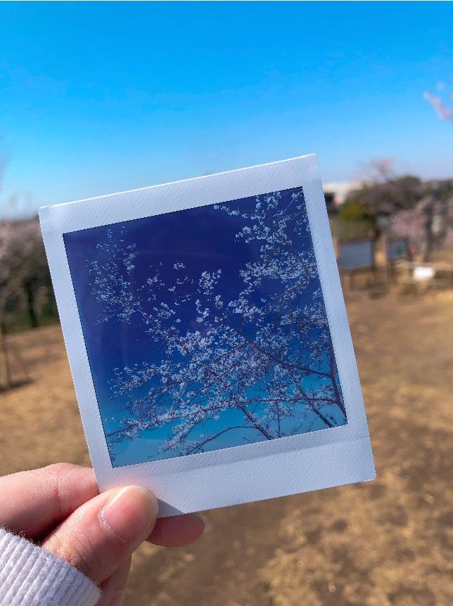 桜のチェキ写真2